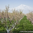 Spring near Mount Ararat