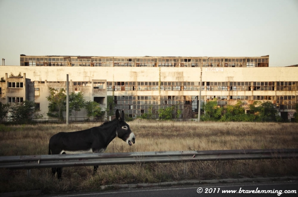 Abandonned factory and donkey