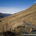 This friendly dog was following us from Ushguli :-)