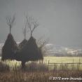 Suspended Haystacks