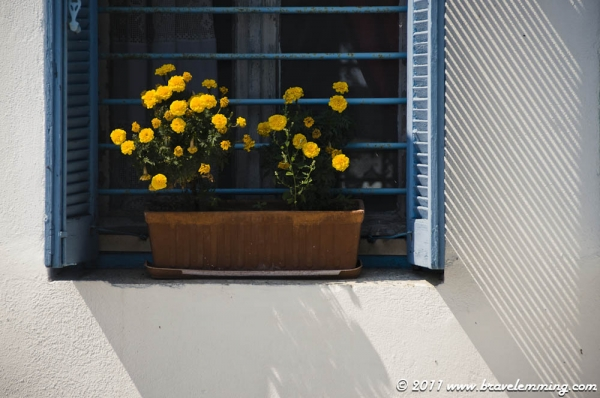 Shadow, flowers and window