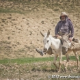 Kurdish man on a donkey