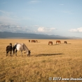 Horses around Song Kul Lake