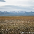 Fields of Edelweiss at Song Kul Lake