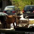 Taxi in Debar