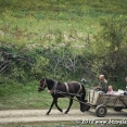 Horse-drawn cart in Moldova
