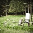 Milk Drum