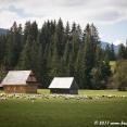 Shepherd in the Tatras