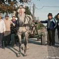 Gypsies with their horse