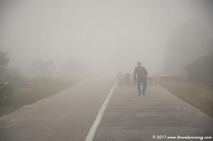 A shepherd in the fog