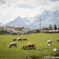 Pasture in High Tatras