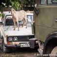 Blog_2013-06-22_Tajikistan_182841