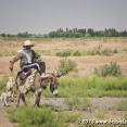 Turkmen Shepherd