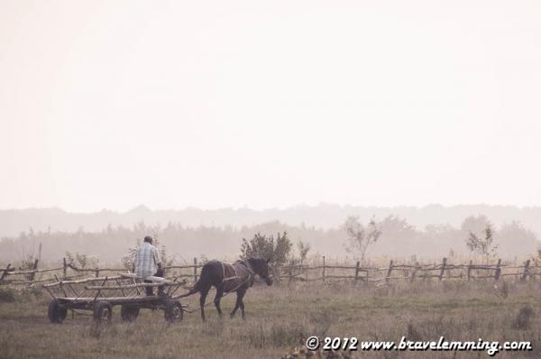 People in fields