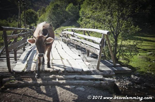 A bridge? We are back to civilization!