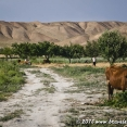 Cycling from Bukhara to Samarkand